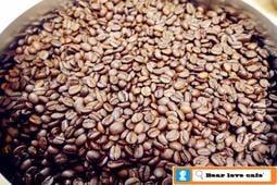※貝勒拉芙※新鮮烘培-哥斯大黎加 塔拉珠 多塔 佛羅里達莊園 藝妓/瑰夏 黑蜜 咖啡豆 (一磅/#2淺培)