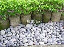 【唐先生拍賣網】黑鵝卵石*20kg裝《免運費》黑卵石 健康步道石頭批發※