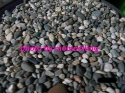 水族箱   鋪底的石頭 / 底沙   ,   限交換