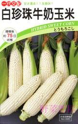 【野菜部屋~中包裝】N15 白珍珠牛奶玉米種子300 顆 , 日本北海道牛奶水果玉米 , 每包260元~