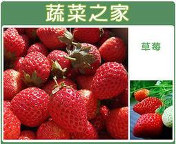 【蔬菜之家】I05.草莓種子20顆(阿里巴巴)
