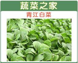 【蔬菜之家】A03.青江白菜種子10000顆 (青梗湯匙菜,綠色葉柄,株矮頭大)