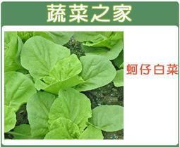 【蔬菜之家】A45.蚵仔白菜種子450顆 (日本進口 ,肉質軟嫩可口)