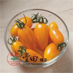 【野菜部屋~】L46 206條紋蕃茄種子2粒 , 亮黃帶紅條紋 , 口味酸甜 , 蕃茄味道濃郁 , 每包12元~