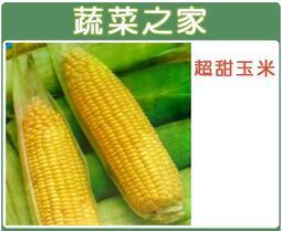 【蔬菜之家】G07.超甜玉米種子30顆//黃穗.米皮薄.柔嫩.甜度高.糖分減退緩慢.耐儲放.品質優