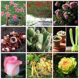↖蠍媽辣椒園 (種子)   各種專業種子 特價 ↗