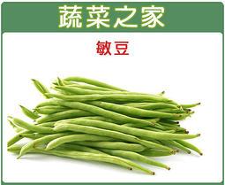 【蔬菜之家】E01.敏豆種子100顆(豆莢特長.豆莢白霧.圓形莢)